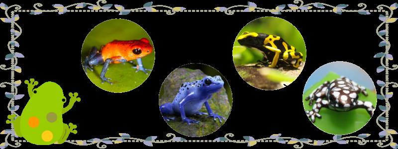 dendrobatidae02