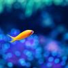 熱帯魚の病気の見分け方と治療方法