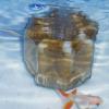 水中フィルター(ろ過器)は茶色く汚れても交換しちゃダメ!?